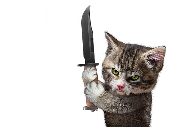 Both cats and knives ignore you